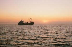 Bristol Bay, Summer 1981, Bering Sea Crabber tendering salmon