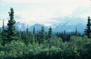 Wrangell Mountains from Alaska Highway Summer 1980